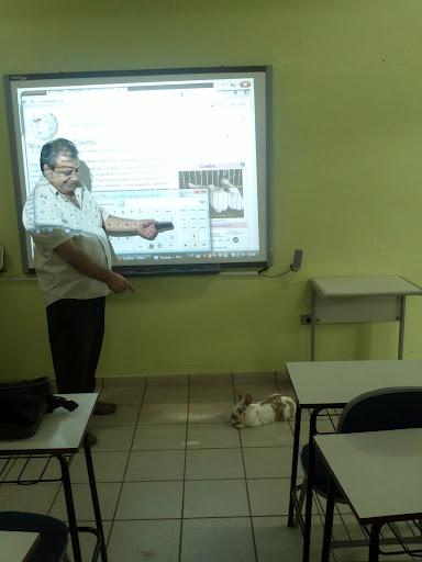 Coelho digital
